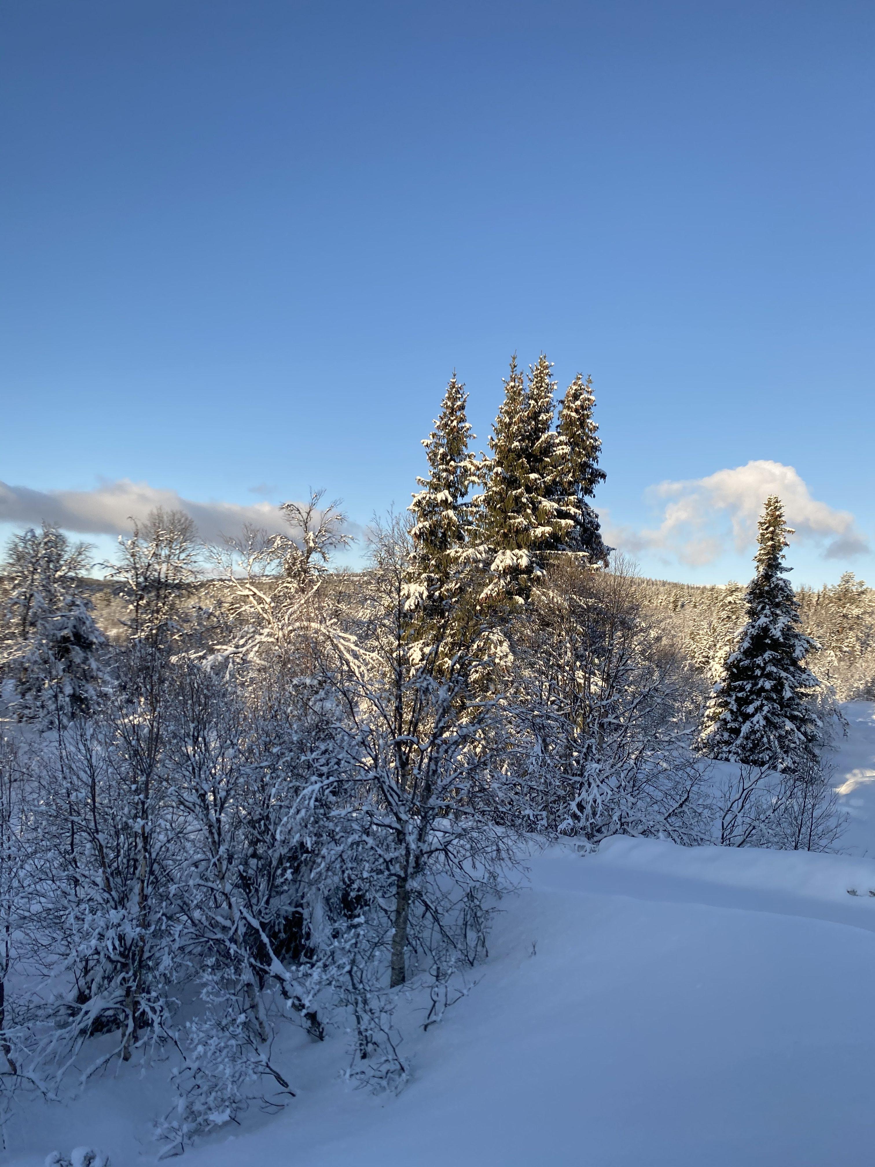Vinter_Gol